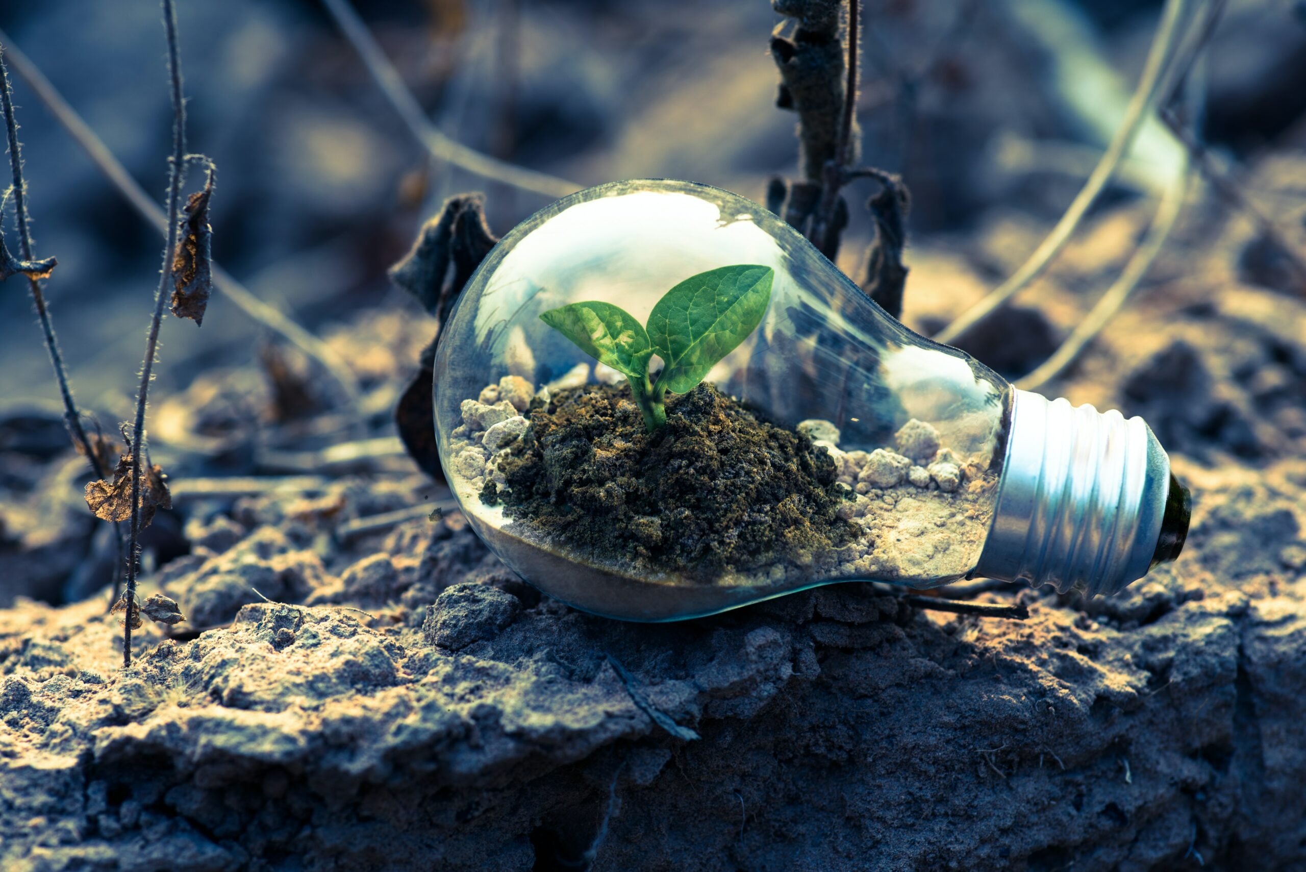 Sustainable digital – a contradiction in terms? (Part 1)